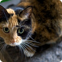 Adopt A Pet :: Molly - Bedford, MA