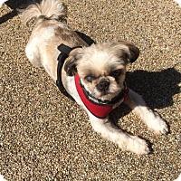 Adopt A Pet :: ROCKY - New Windsor, NY