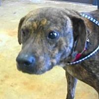 Adopt A Pet :: AA-Paco - Tyler, TX