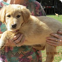Adopt A Pet :: WINSTON - Lincolndale, NY