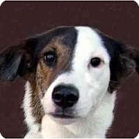 Adopt A Pet :: Igor - New York, NY