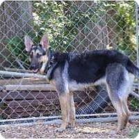 Adopt A Pet :: Sadie - New Boston, NH