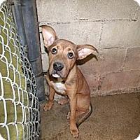 Adopt A Pet :: Finn - Rocky Mount, NC