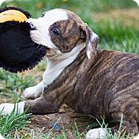 Adopt A Pet :: Phoebe - Sacramento, CA