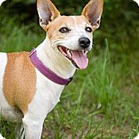 Adopt A Pet :: Kallie - Fort Valley, GA