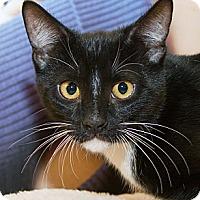 Adopt A Pet :: Finn - Irvine, CA