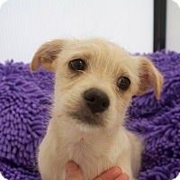 Adopt A Pet :: LARRY - Mission Viejo, CA