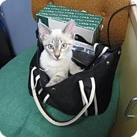 Adopt A Pet :: Athena - Lake Charles, LA