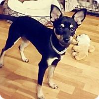 Adopt A Pet :: Troy - Honolulu, HI