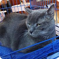 Adopt A Pet :: Oliver - N. Billerica, MA
