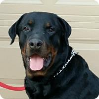 Adopt A Pet :: Chevy - Gilbert, AZ