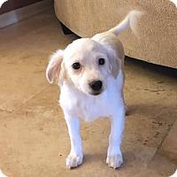 Adopt A Pet :: Hatchimal - Phoenix, AZ