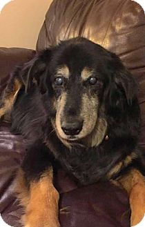 Shepherd (Unknown Type)/Collie Mix Dog for adoption in Sharon Center, Ohio - Jessie