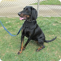 Adopt A Pet :: MORGAN - LaGrange, KY