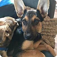Adopt A Pet :: Callahan - Marlton, NJ