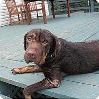 Adopt A Pet :: Willow - Newport, VT