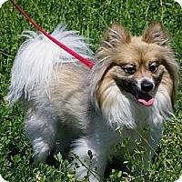 Adopt A Pet :: LARKIN - Hesperus, CO