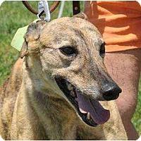 Adopt A Pet :: Chrissy (Crystal Chrysler) - Chagrin Falls, OH