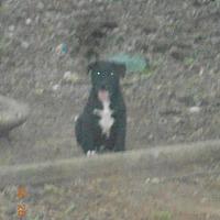Adopt A Pet :: Barley - Loganville, GA