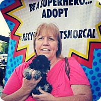 Adopt A Pet :: Bella - Sacramento, CA