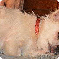 Adopt A Pet :: Skippy - Prole, IA