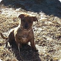 Adopt A Pet :: Classic - Evergreen, CO