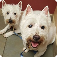 Adopt A Pet :: CRASH AND ROWDY- ARE ADOPTED - Frisco, TX