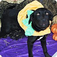 Adopt A Pet :: Axel - Ogden, UT