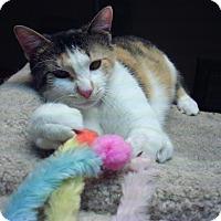 Adopt A Pet :: Shilo - Bridgeton, MO
