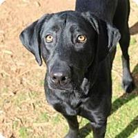 Adopt A Pet :: Elysee - Charleston, SC