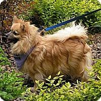 Adopt A Pet :: Kimmy - Rigaud, QC