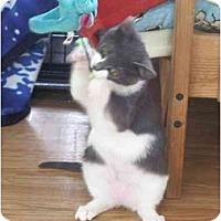 Adopt A Pet :: Lila - Jenkintown, PA