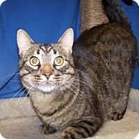 Adopt A Pet :: Casper - Colorado Springs, CO