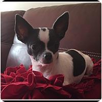 Adopt A Pet :: Skylar - Indian Trail, NC