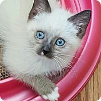 Adopt A Pet :: Merlin - Davis, CA