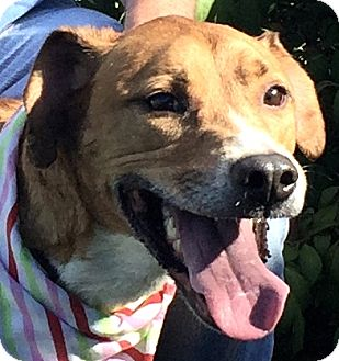 Hound (Unknown Type) Mix Dog for adoption in Evansville, Indiana - Micky