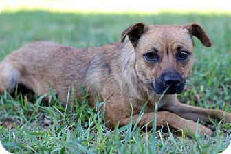 Terrier (Unknown Type, Small) Mix Dog for adoption in Waldorf, Maryland - April