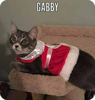 Domestic Shorthair Kitten for adoption in Tega Cay, South Carolina - Gabby