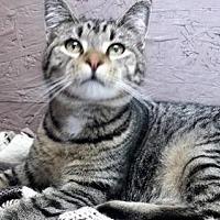 Adopt A Pet :: Melvin - Seaford, DE