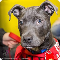 Adopt A Pet :: Negan - Grand Rapids, MI