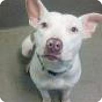 Adopt A Pet :: Emma Lou 6446 - Columbus, GA