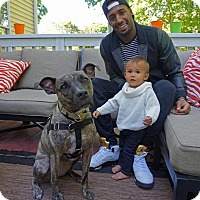 Adopt A Pet :: Odie - Cranston, RI
