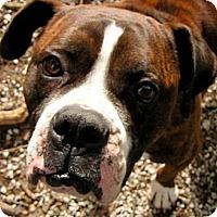 Adopt A Pet :: LANTANA - Wakefield, RI