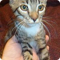 Adopt A Pet :: Binks - Porter, TX