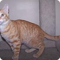 Adopt A Pet :: K-Sophie-Hoboken - Colorado Springs, CO