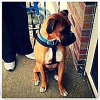 Adopt A Pet :: Axel - Alliance, NE