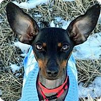 Adopt A Pet :: Mia - Cheyenne, WY
