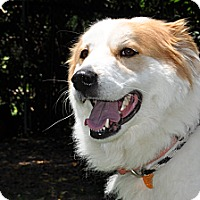 Adopt A Pet :: Lucy - Indian Trail, NC