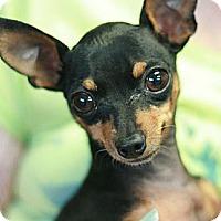 Adopt A Pet :: Junior - Canoga Park, CA