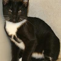 Adopt A Pet :: Hughes - Salisbury, NC